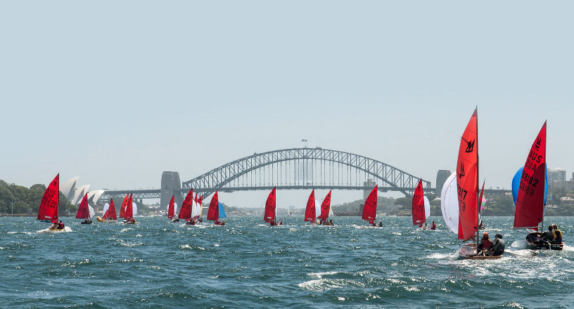 A fleet of Mirror dinghies racing downwind towards the Sydney Harbour bridge